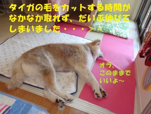 f0121712_14381238.jpg