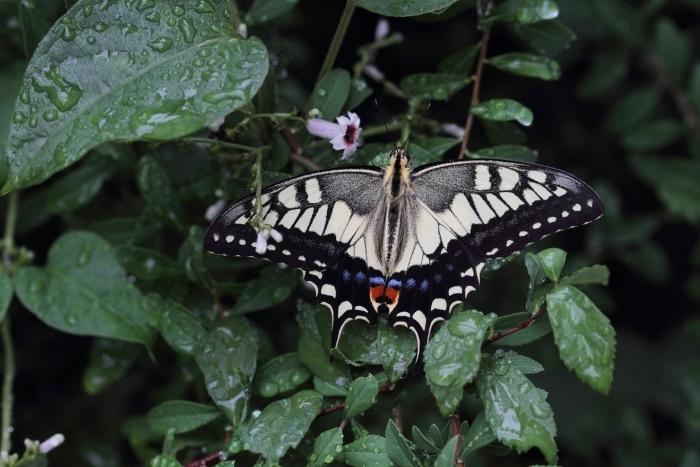 庭で羽化した蝶_d0026817_14573710.jpg