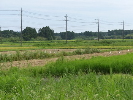稲刈りが始まっています_a0123836_17152949.jpg