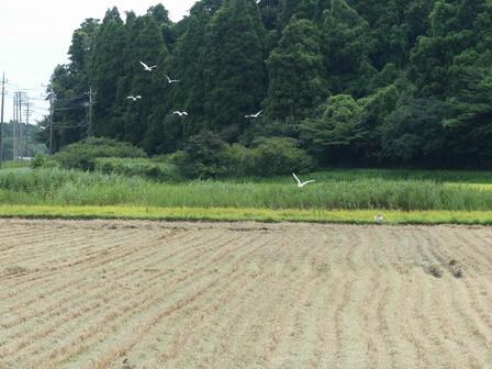 稲刈りが始まっています_a0123836_17153560.jpg