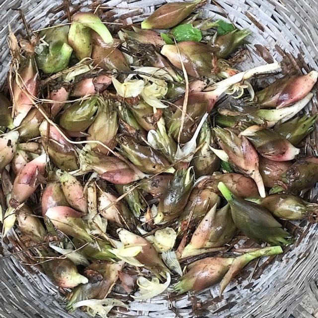 ミョウガの収穫_e0226943_22360033.jpg