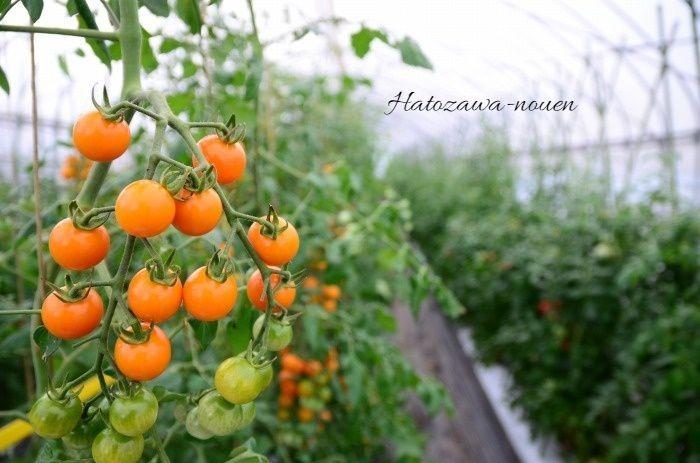 はとざわ農園さんに畑の写真を撮らせてもらいました_b0341869_19055994.jpg