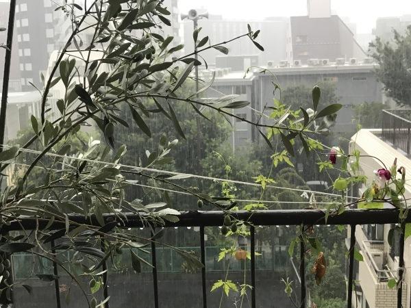 港区辺だけ集中豪雨、とレモンにはらぺこあおむし_e0397389_08262817.jpeg
