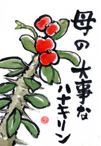 ハナキリン ニーサちゃん フウセンカズラ_f0375804_09010834.jpg