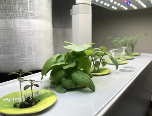 これまでの種植え、水やり、太陽も不要の未来のキッチン菜園⁉_b0007805_05274728.jpg