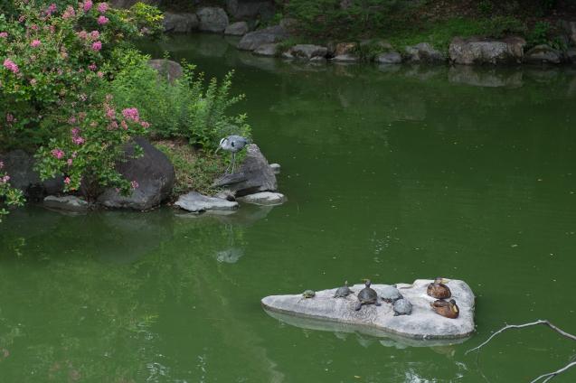 京都御所の鮮やかサルスベリ_e0369736_19140332.jpg