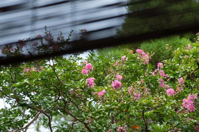 京都御苑の拾翠亭_e0369736_19473336.jpg
