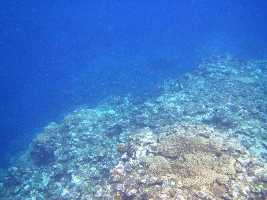 マンタとウミガメに会えたよ~\(^o^)/_a0189838_05430540.jpg