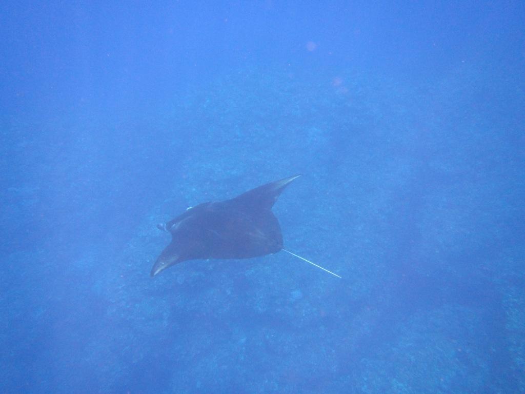 マンタとウミガメに会えたよ~\(^o^)/_a0189838_05483158.jpg