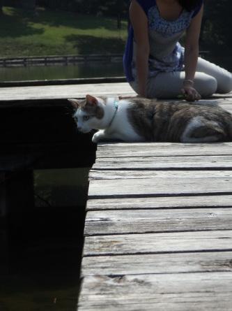 ピクニック 猫と。_f0161652_23494928.jpg
