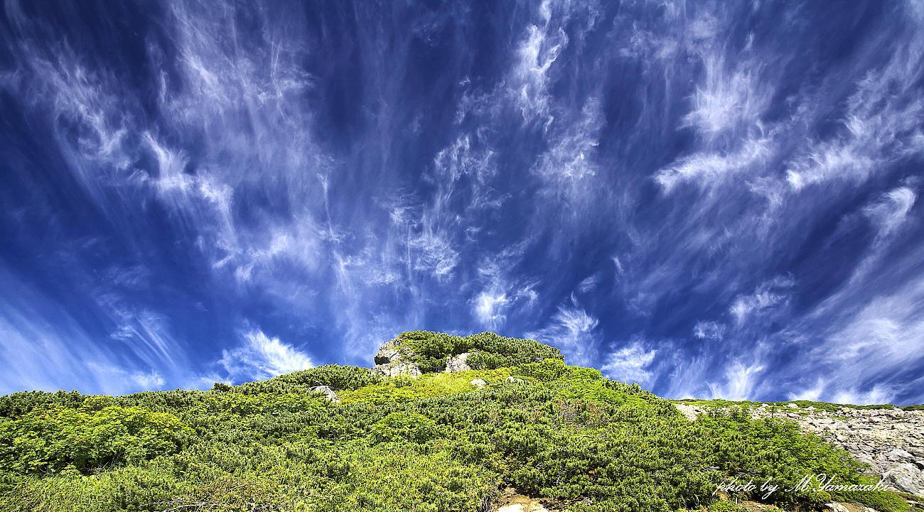 夏山と雲と森のクロジ_c0217255_06004703.jpg