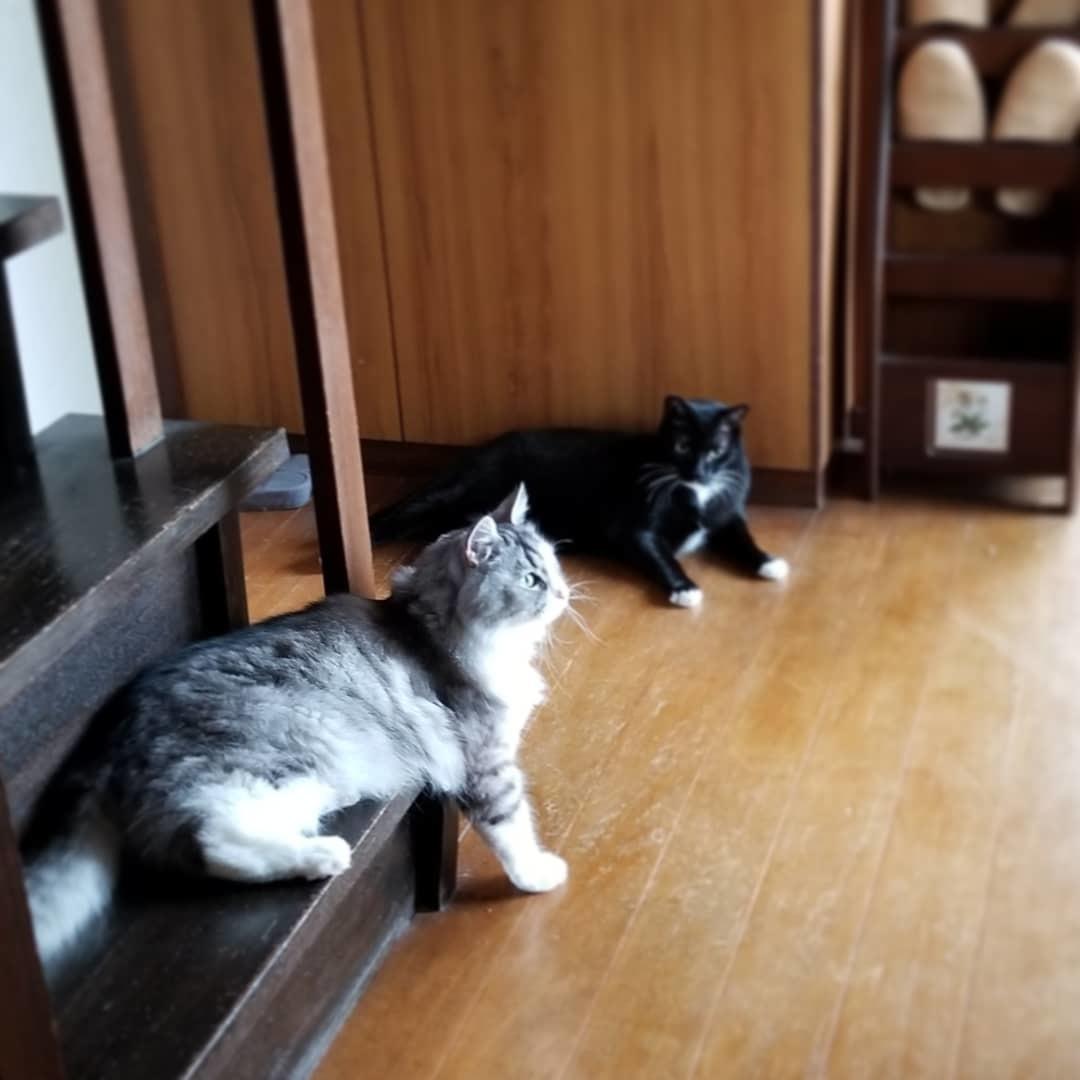 実家猫 * 暑いとこたえるね~!_f0236260_02020113.jpg