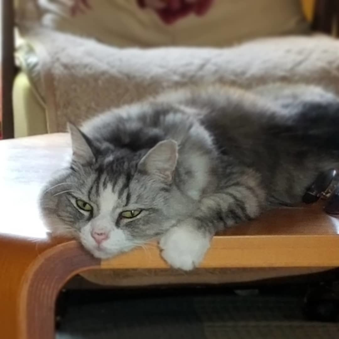 実家猫 * 暑いとこたえるね~!_f0236260_02255338.jpg