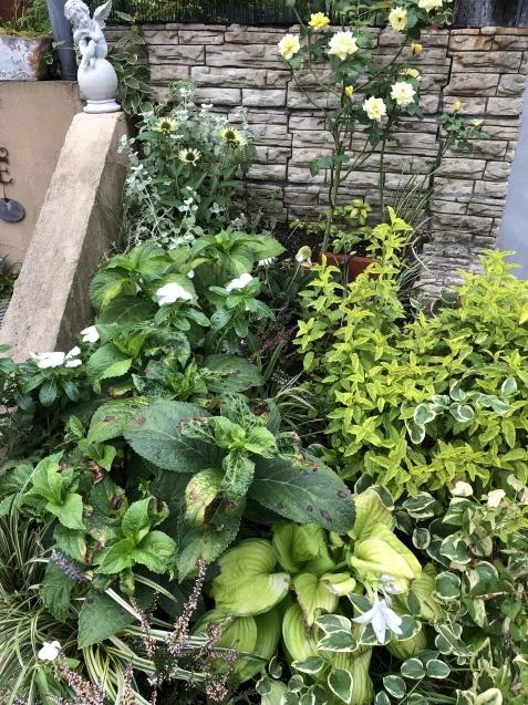 アプローチ花壇、「エキナセア'デリシャス・ナゲット'」の植え込みとエキナセア'グリーンエンジェル'その後_a0243064_11453265.jpg