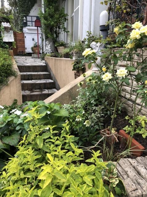 アプローチ花壇、「エキナセア'デリシャス・ナゲット'」の植え込みとエキナセア'グリーンエンジェル'その後_a0243064_11460926.jpg