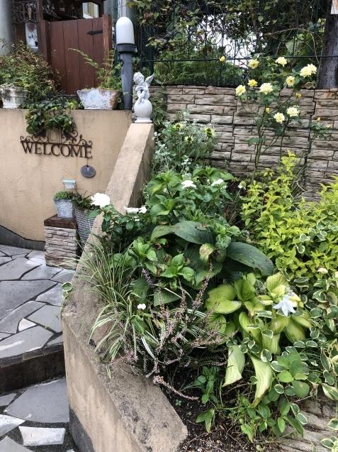 アプローチ花壇、「エキナセア'デリシャス・ナゲット'」の植え込みとエキナセア'グリーンエンジェル'その後_a0243064_11490543.jpg