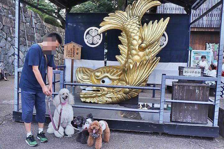 名古屋城夏まつり。_b0111376_15435709.jpg