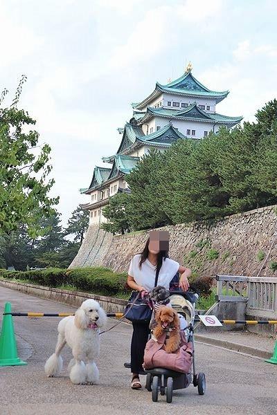 名古屋城夏まつり。_b0111376_15480221.jpg