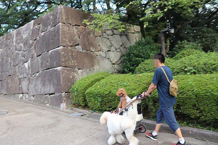 名古屋城夏まつり。_b0111376_15481599.jpg