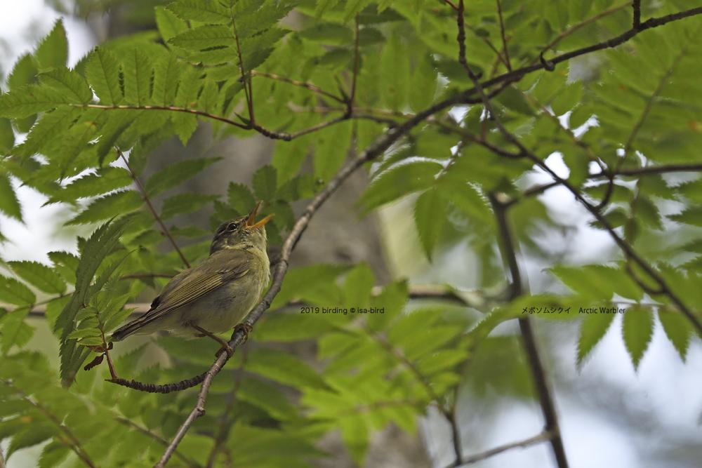 苔の森にて_d0164892_20562245.jpg