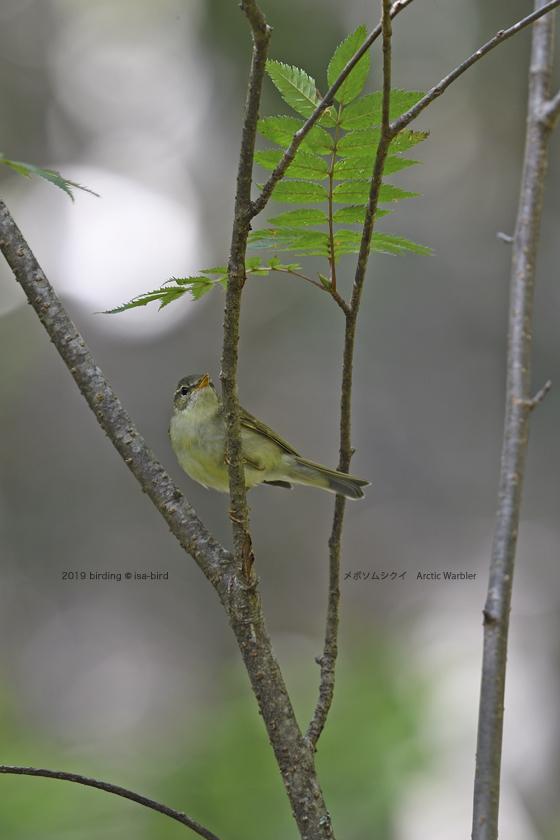 苔の森にて_d0164892_20562501.jpg