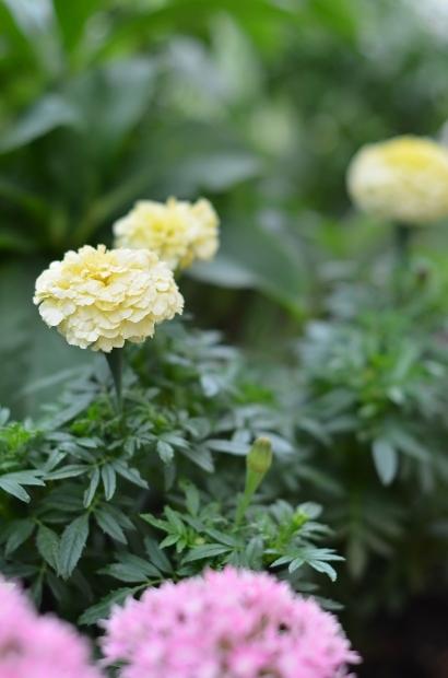 夏の庭_d0025294_15453786.jpg