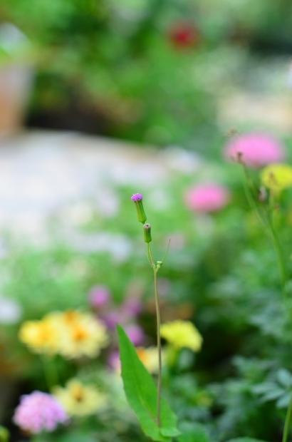夏の庭_d0025294_15455204.jpg