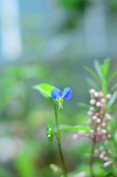 夏の庭_d0025294_15462816.jpg