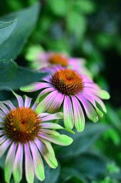 夏の庭_d0025294_15464228.jpg