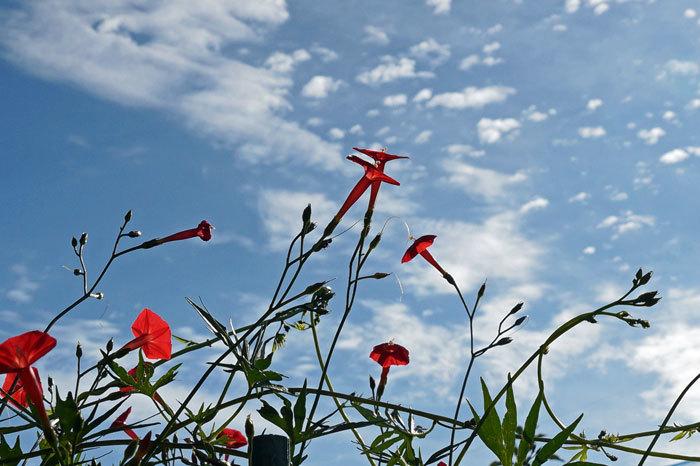 散歩中に出会った花たち_d0162994_08385293.jpg