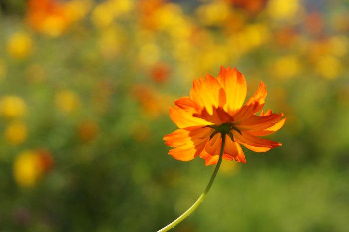 散歩中に出会った花たち_d0162994_08394758.jpg