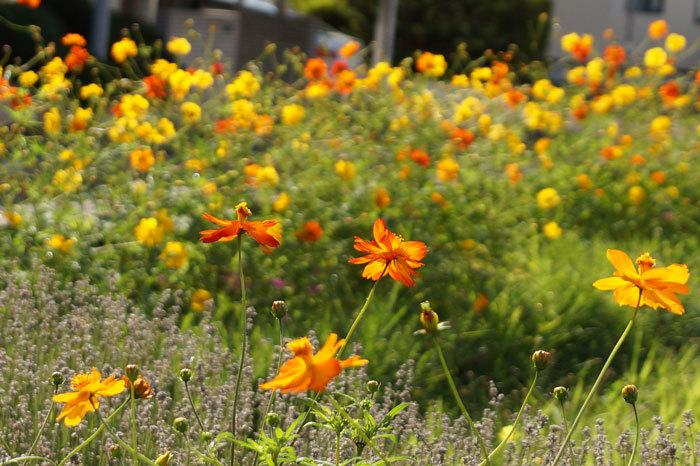 散歩中に出会った花たち_d0162994_08400206.jpg
