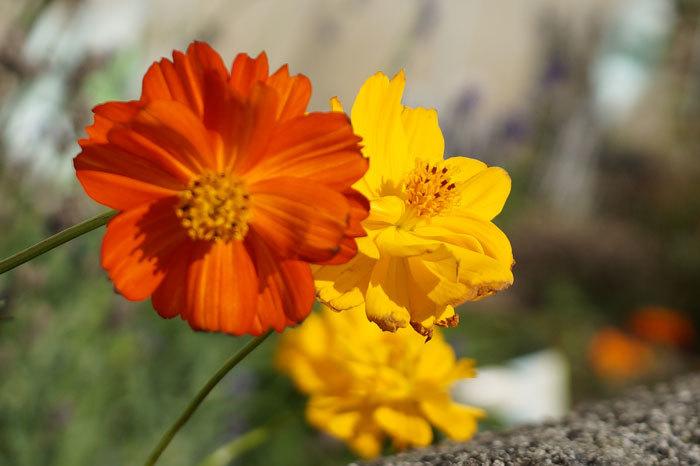散歩中に出会った花たち_d0162994_08402128.jpg