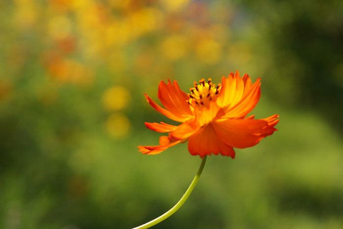 散歩中に出会った花たち_d0162994_08450255.jpg