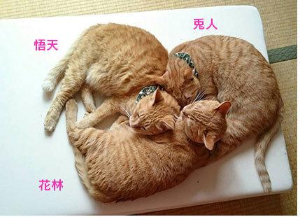 仕事にならない;;&フリマ品6箱!!&ひめちゃん通信_d0071596_21592065.jpg