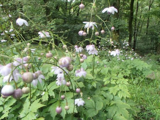 咲き続ける8月の花_f0064906_15345735.jpg