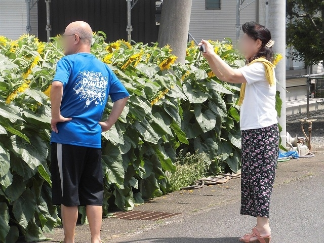 太陽に向かい大輪が咲き誇る! 津田の先輩・井出靖和さんのヒマワリ畑_f0141310_07155430.jpg