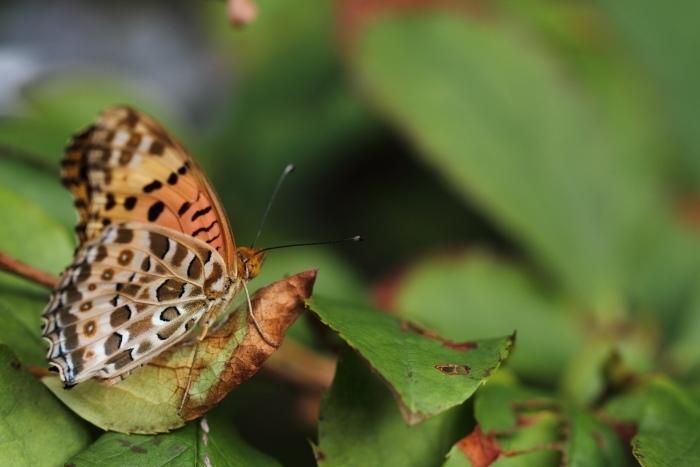 庭で羽化した蝶_d0026817_19222673.jpg