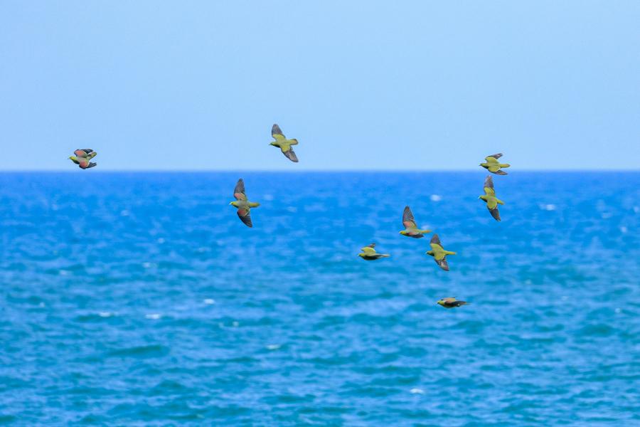 ブログテーマ『鳴いた!見つけた!夏の野鳥だより大募集!』_f0357923_12522030.jpg