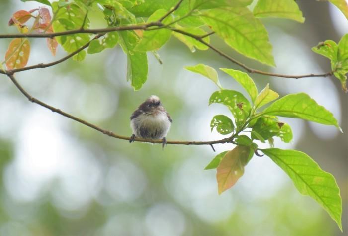 ブログテーマ『鳴いた!見つけた!夏の野鳥だより大募集!』_f0357923_13040388.jpg