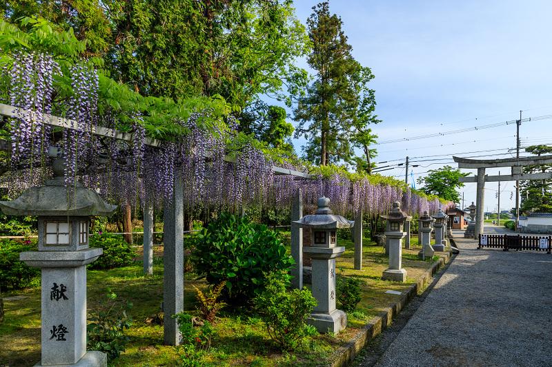 三大神社の藤_f0155048_0254238.jpg