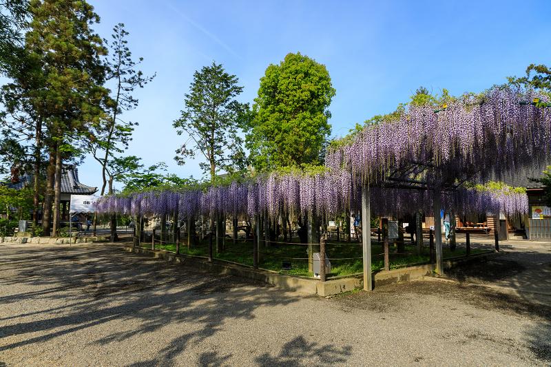 三大神社の藤_f0155048_0255885.jpg