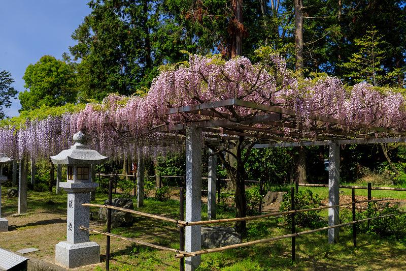 三大神社の藤_f0155048_0285888.jpg