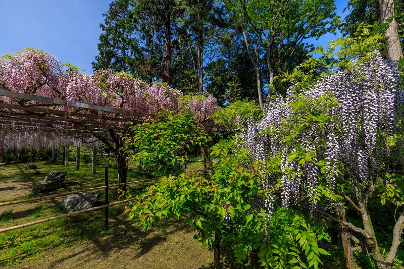 三大神社の藤_f0155048_028598.jpg