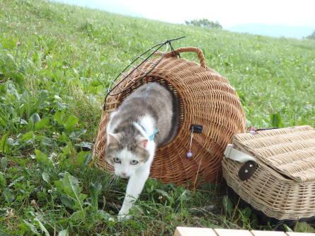 ピクニック 猫と。_f0161652_01441279.jpg