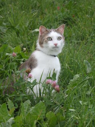 ピクニック 猫と。_f0161652_03404766.jpg
