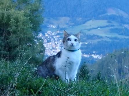 ピクニック 猫と。_f0161652_04025012.jpg