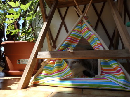 ピクニック 猫と。_f0161652_04295158.jpg