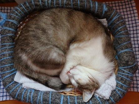 ピクニック 猫と。_f0161652_04382836.jpg