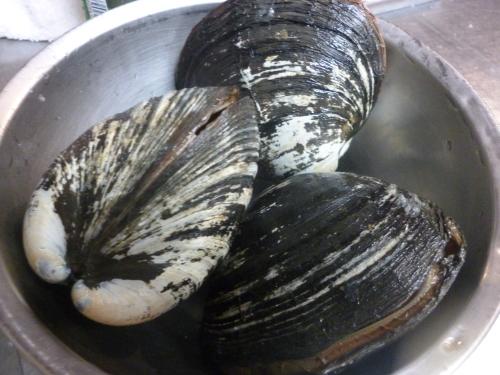 貝って美味しいですね!_e0252966_12595560.jpg